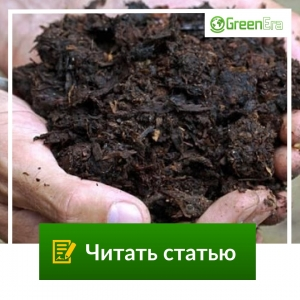 Удобрения из растений: польза, изготовление