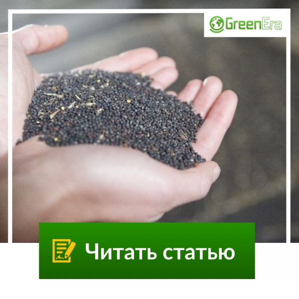 Зачем нужна обработка семян перед посевом?